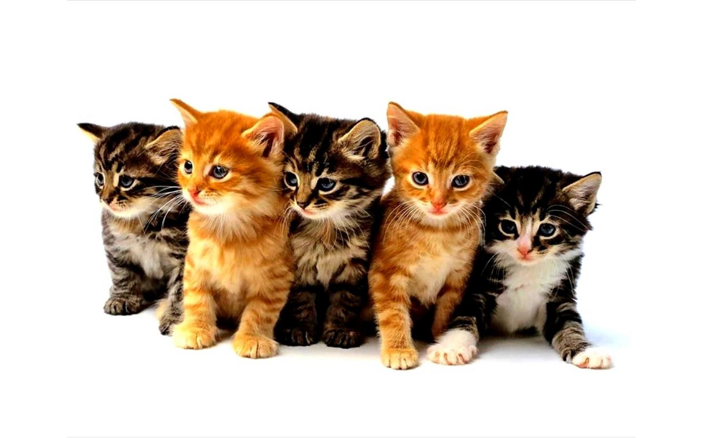 Christmas kittens wallpaper