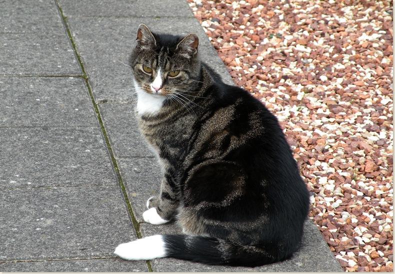 één van de twee katten van schoonzus Annie, 11 sept. 2008