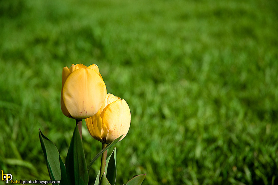 Spring Fall, Nikon D300, Nikkor18-70@70mm, F4.5, 1/1000s, Iso200, EV+1