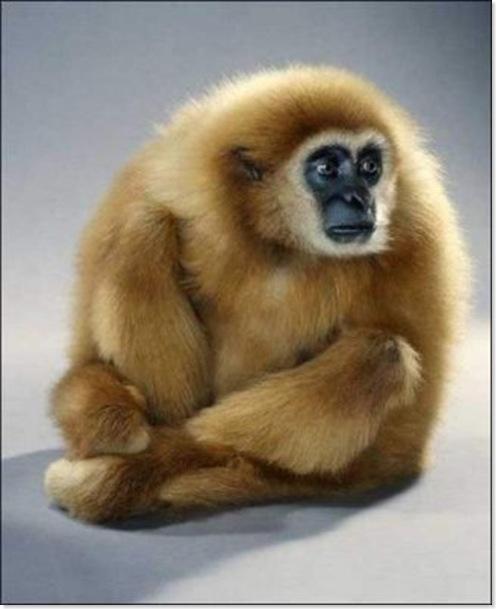Monos (5)