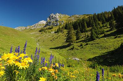 مناظر رائعة من سويسرا NW-BE-05