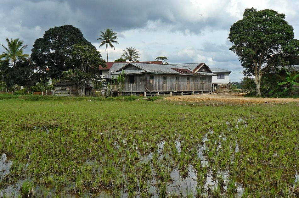 Borneo Malese, Bario, Kelabit Highlands,foto di viaggi