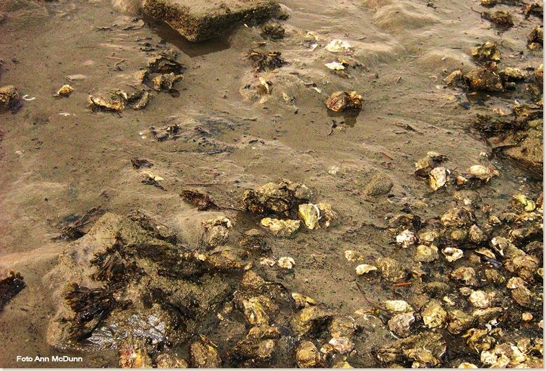 Waddenzee, laagtij. Zondag 27 juli 2008
