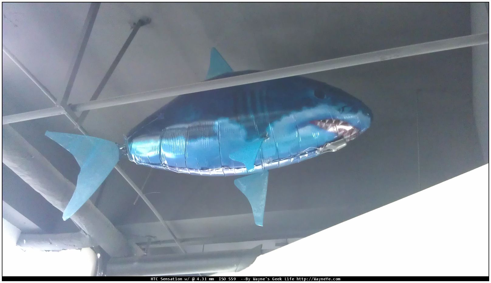 Flying shark in TW office