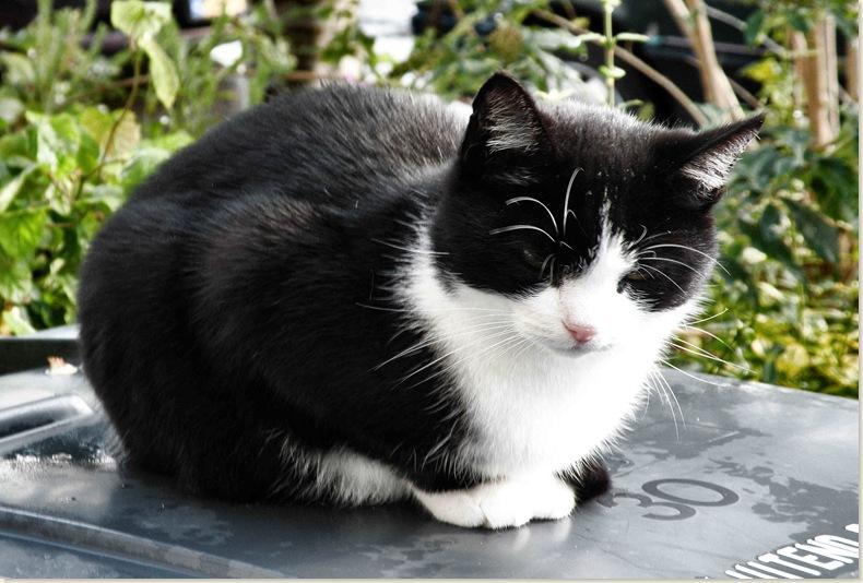 De kat van de buren is blij met het nieuwe plekje van de container, 27 okt. 2008
