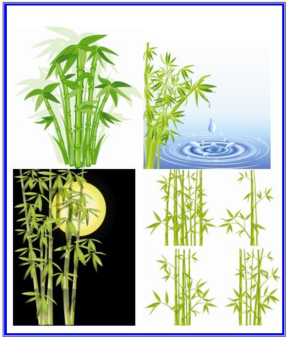 cây tre, cay tre, bamboo