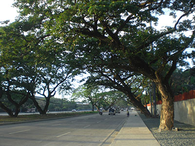 A section of Katipunan Ave.