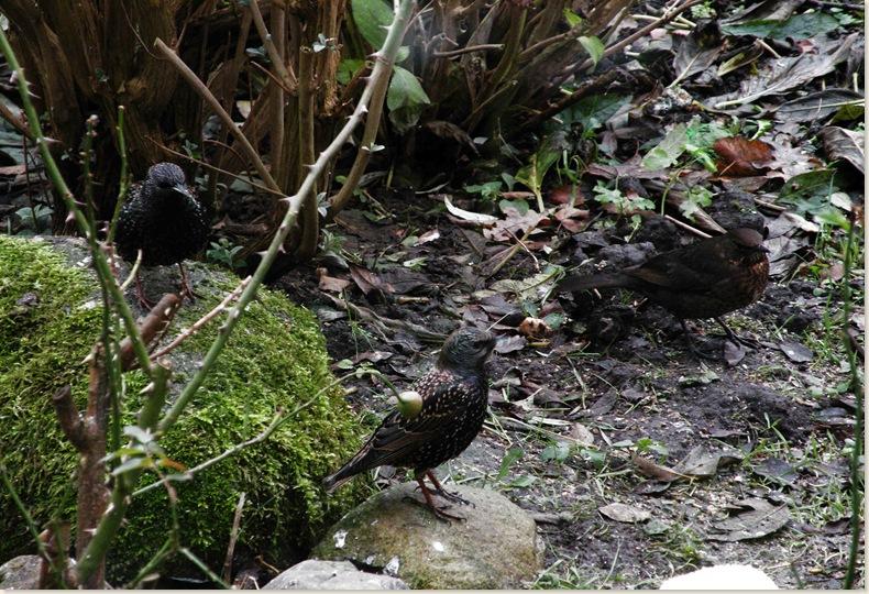 Wachtende vogels, waar blijft ze nu. 5 dec. 2008