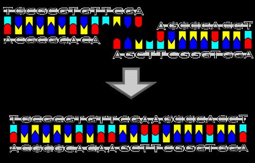 DNA Ligation