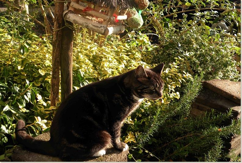 Poes van de buren op vogeljacht, 9 nov. 2008