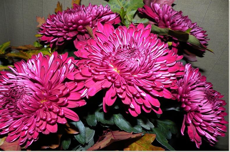 Chrysanten voor mij de echte herfstbloemen  3 nov. 2008