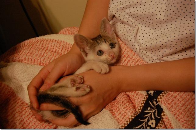 雪梨的猫爪印