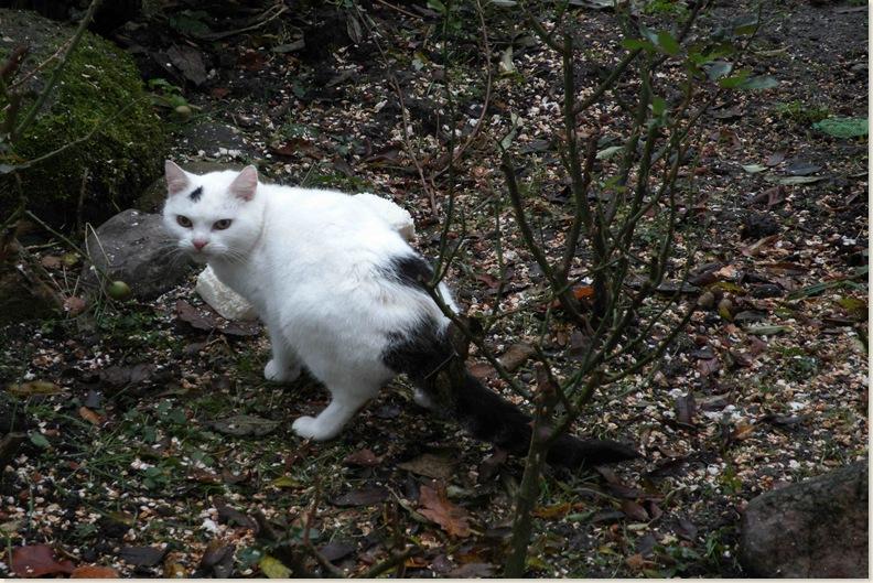Deze kat eet ook al frituurvet, 25 nov. 2008