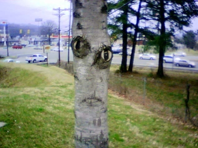 Alien or Tree?