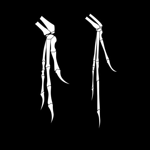 Deinonychus Hand vs. Archaeopteyrx Hand