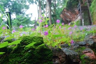 flower in Poo tok thailand