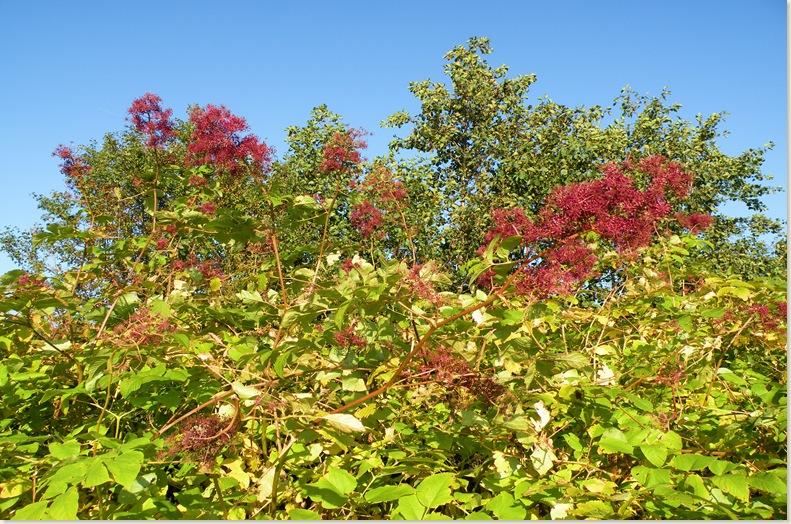 Bloemen in de herfst, De Kruidhof 11 okt. 2008