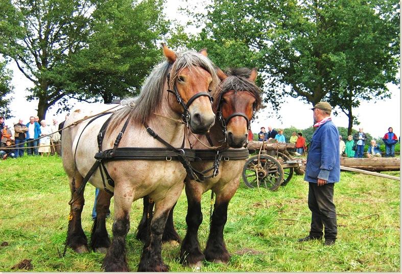 Belgische paarden trekken de bomen, Drente III dorpsfeest Exloo, zondag 20 juli 2008