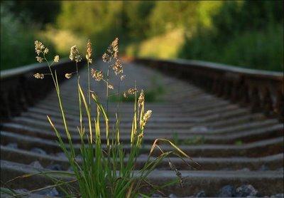 Uomo, Dio, Bellezza, canto, entusiasmo, Vita, strada, sentiero, percorso