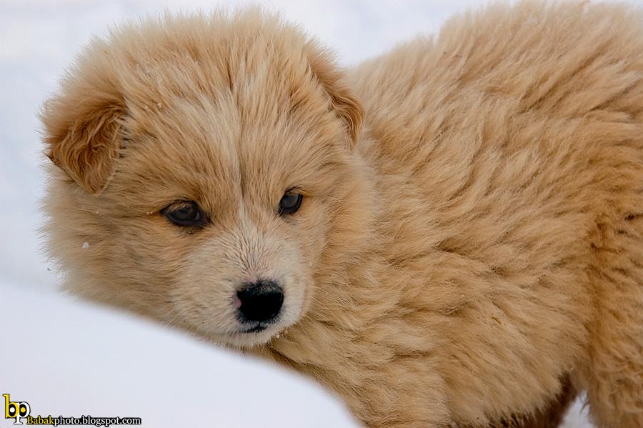 Puppy, Nikon D70s, Nikkor70-200@200mm, F7.1, 1/800s, Iso200