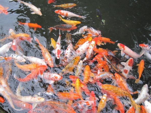 新竹尖石峇里溫泉度假村