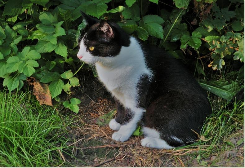 Poes van de buren zoekt de schaduw op, donderdag 31 juli 2008