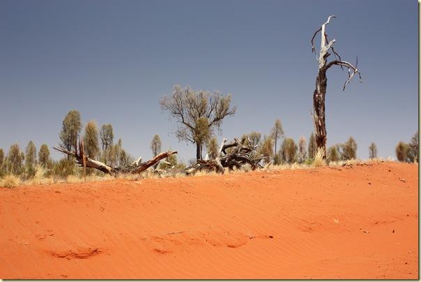 Australie2008_ 709_Red Center_Uluru