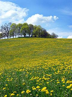 مناظر رائعة من سويسرا Sriimg20060403_6601453_0