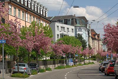 مناظر رائعة من سويسرا DSC_9824