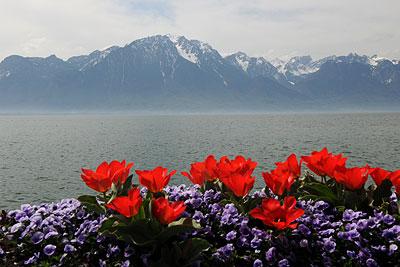 مناظر رائعة من سويسرا VD-MT-40