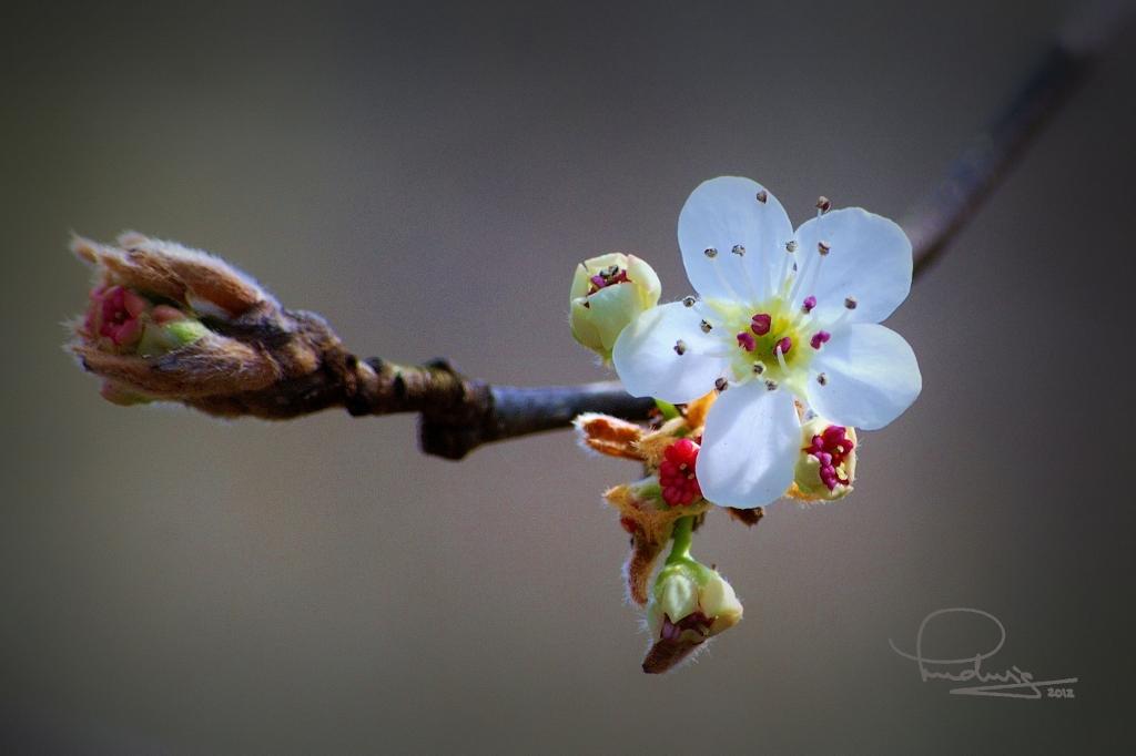 Spring comes to Georgia