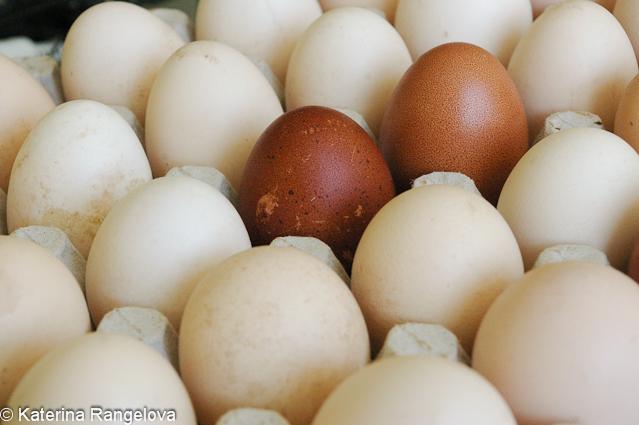 eggs2